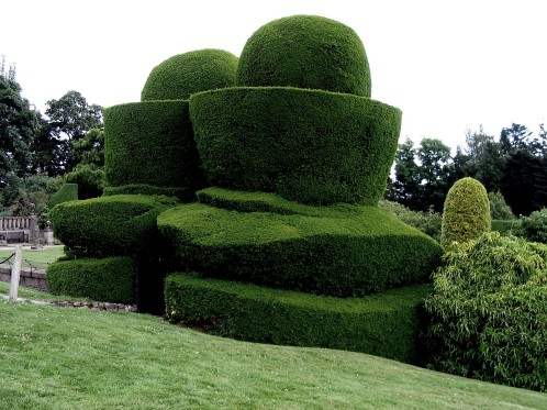 Crathes Castle topiary