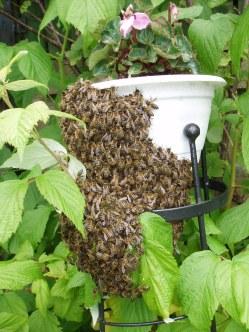 Flowerpot swarm