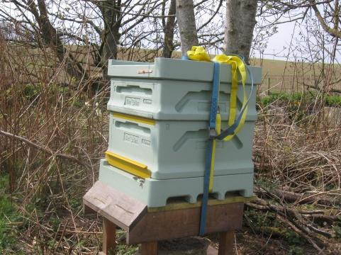 Bee Box National