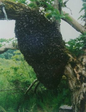 swarm-on-branch