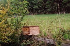 A swarm arriving at a bait hive (Photos: John Tait)