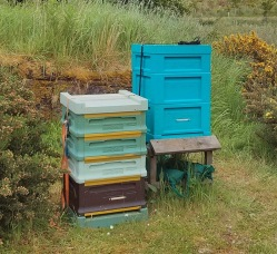 Small poly hives - Bee Box and Swienty