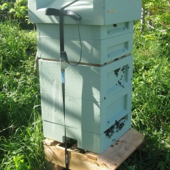 Large poly hive - BHS