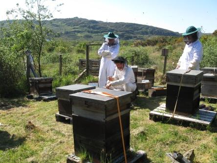 Colonsay apiary