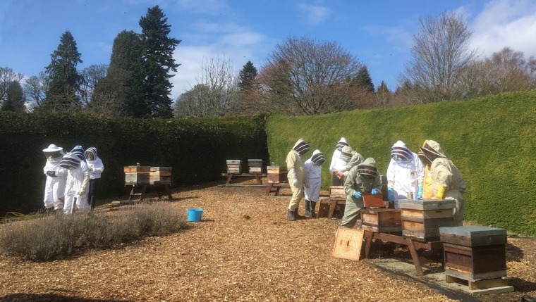 Crathes apiary